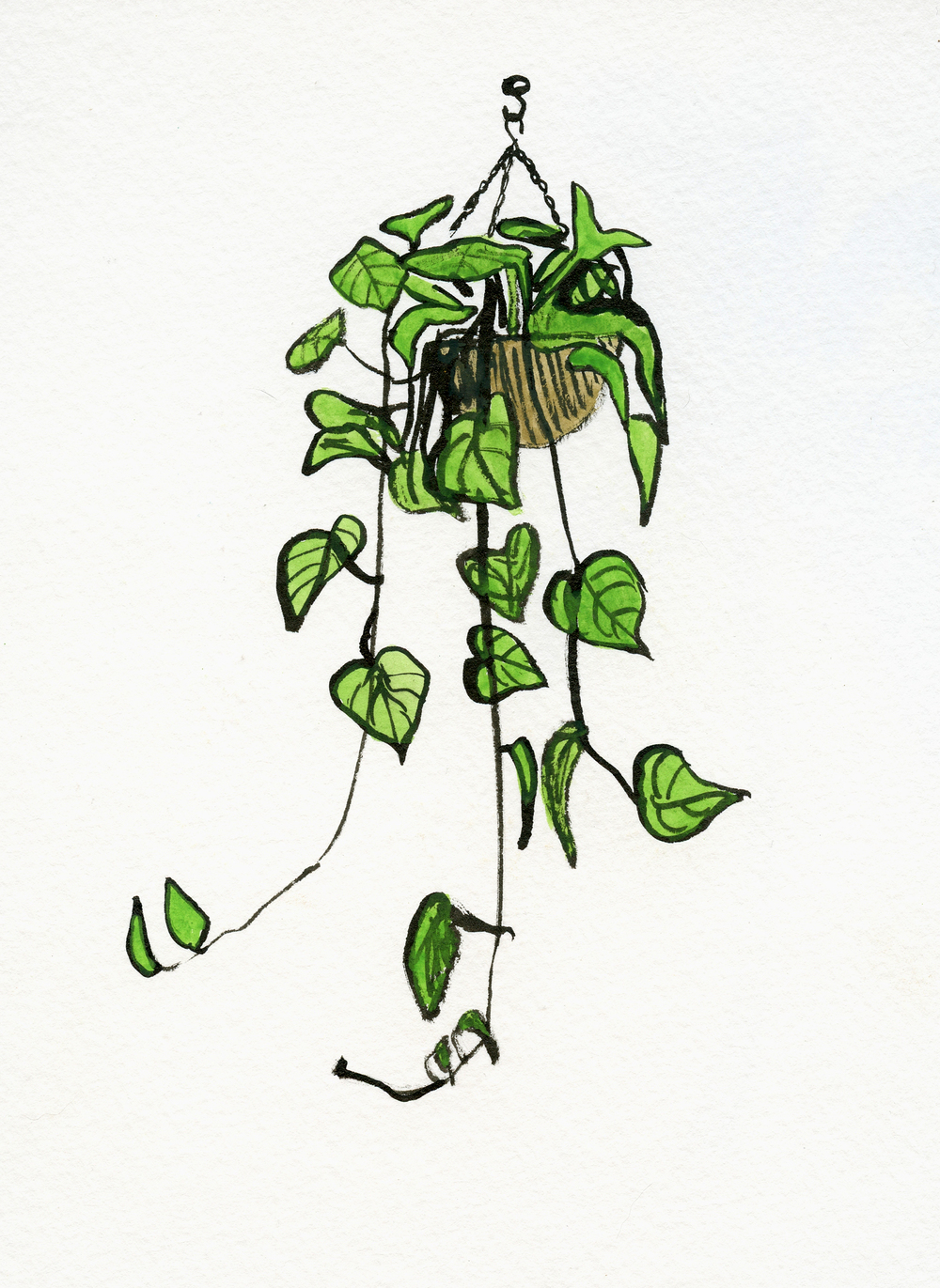 House Plant Drawing at GetDrawings | Free download