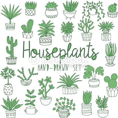 414x416 Potted Fern Drawing Clipart