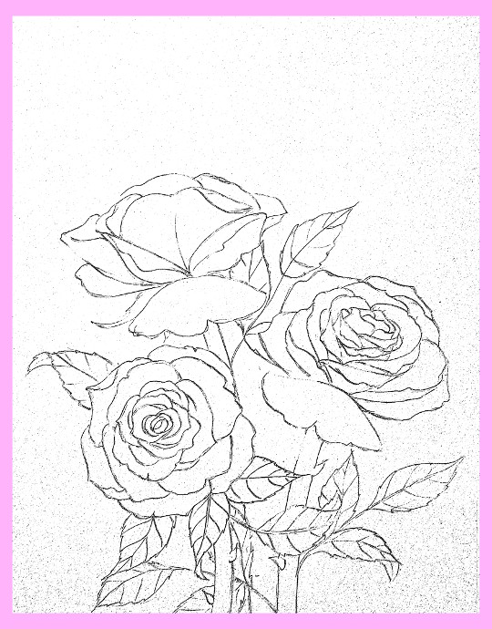 540x690 How Draw Rose