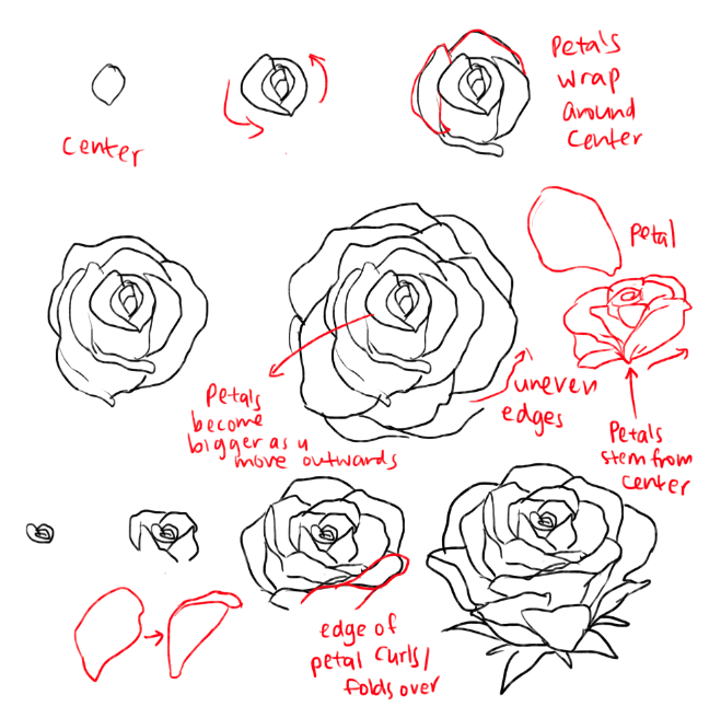 659x656 Kelpls There Are Different Kinds Of Peonies Idk Which One So I