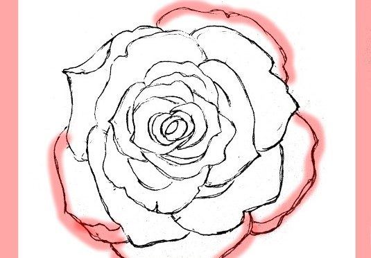 535x372 How To Draw Roses