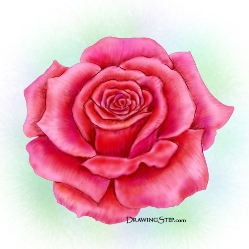 500x500 How To Draw A Rose Step By Step