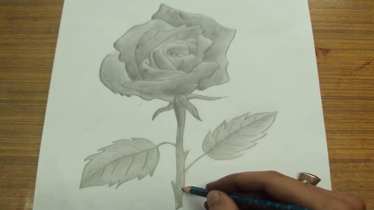 1280x720 How To Draw A Rose With Pencil Blending And Shading