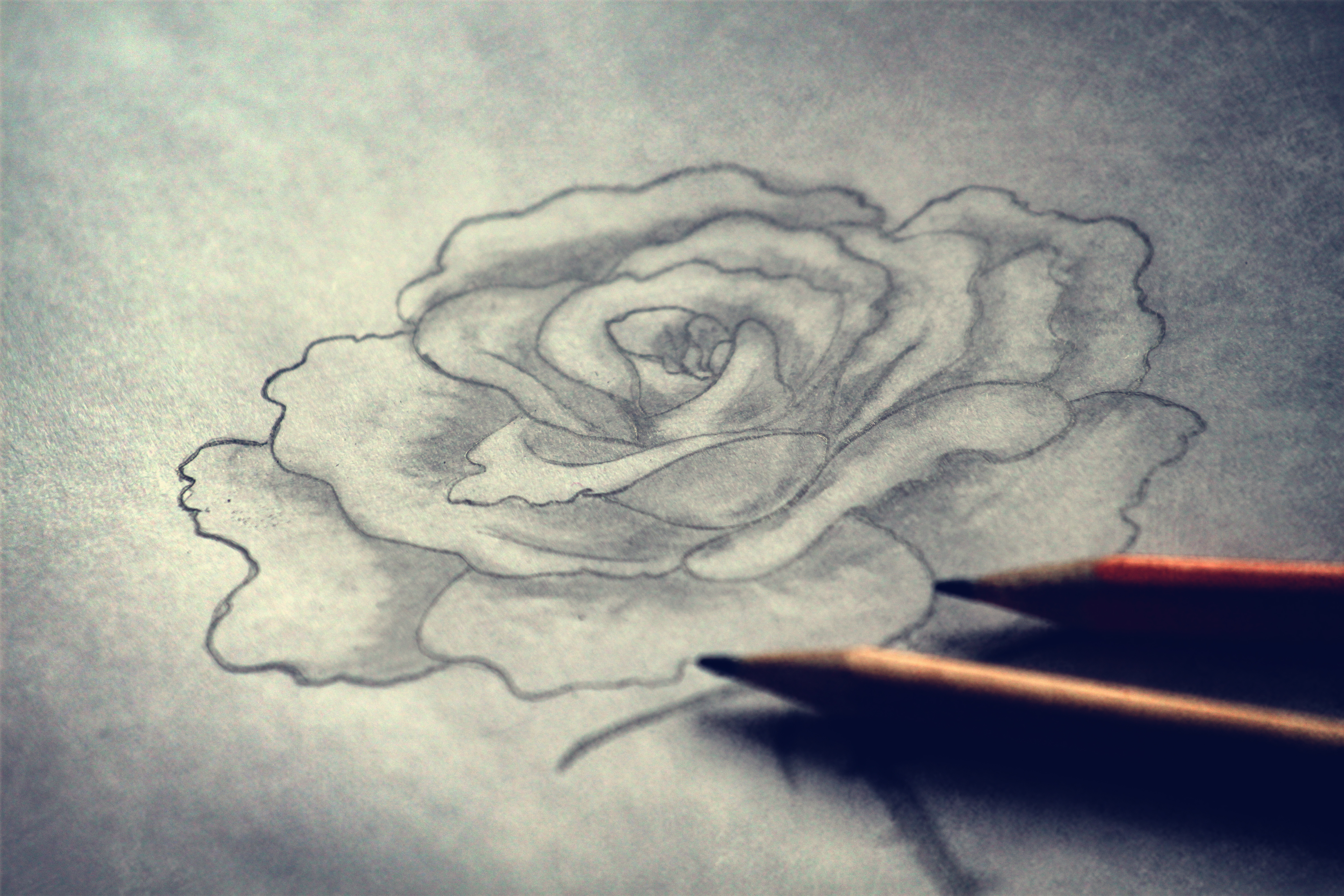 4752x3168 How To Shade A Flower Rose When Drawing With A Graphite Pencil
