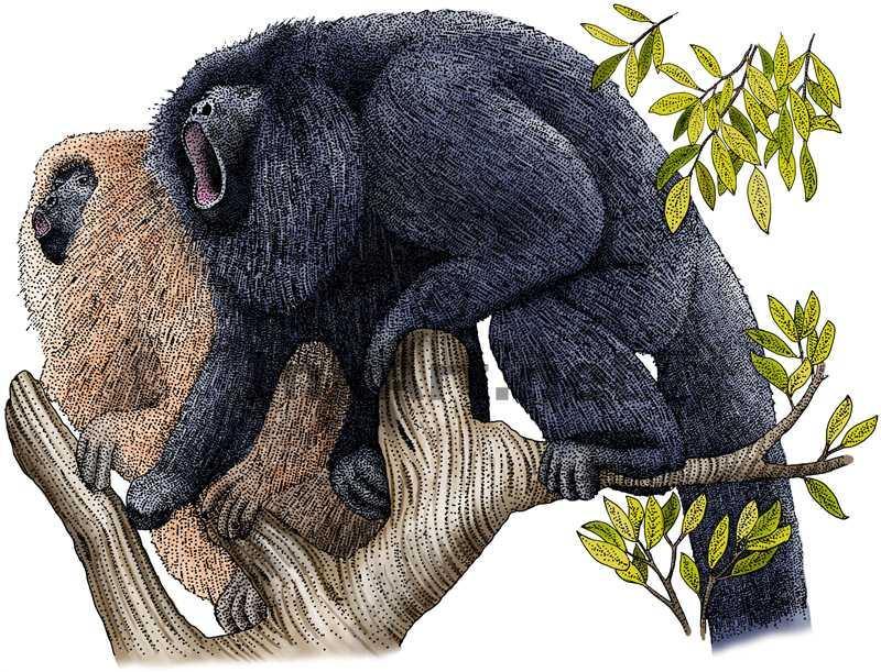 800x611 Black Howler Monkeys Stock Art Illustration