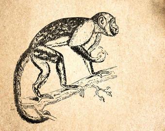 340x270 Howler Monkey Etsy