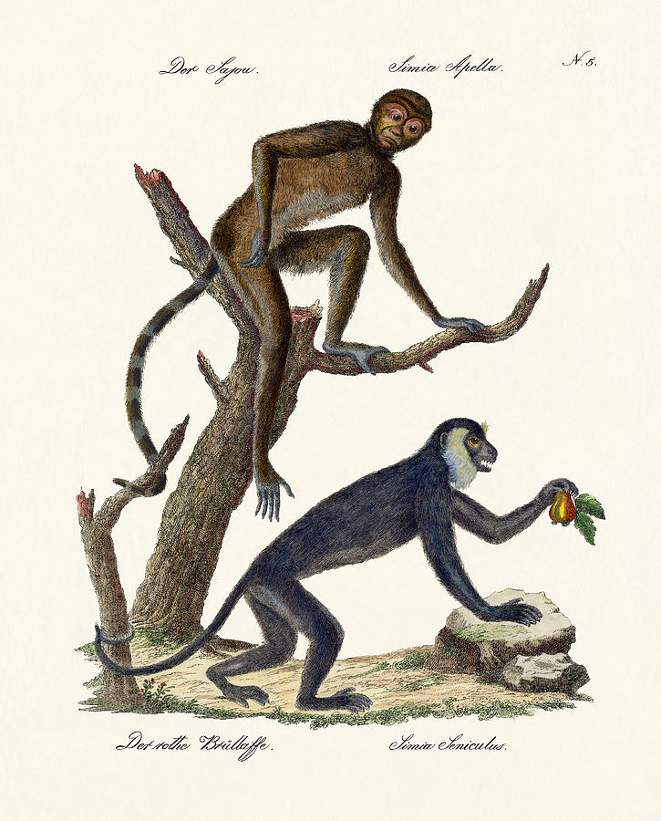 Howler Monkey Drawing at GetDrawings.com | Free for personal use ...