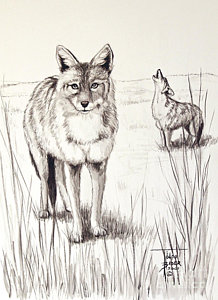 218x300 Howling Coyote Paintings Fine Art America