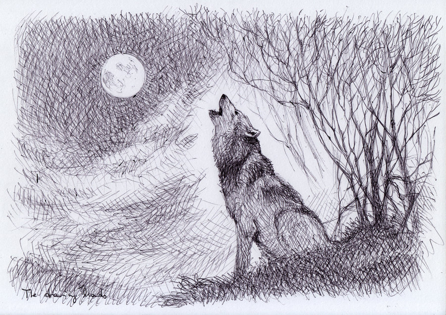 900x636 howling wolf by thedrawinghands d58rqlx by pianosophie01 on deviantart
