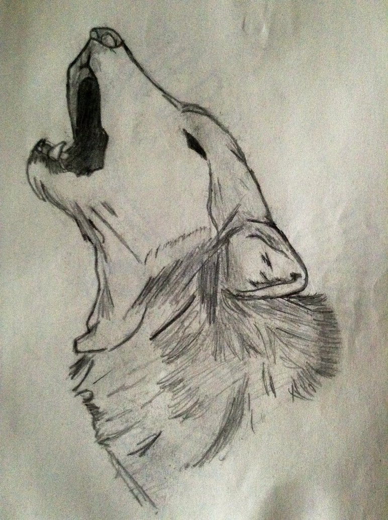 772x1034 Howling Wolf Head Sketch By Bloodwolf 34