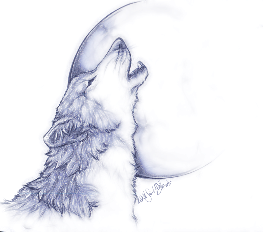 Howling Wolf Drawing At Getdrawings