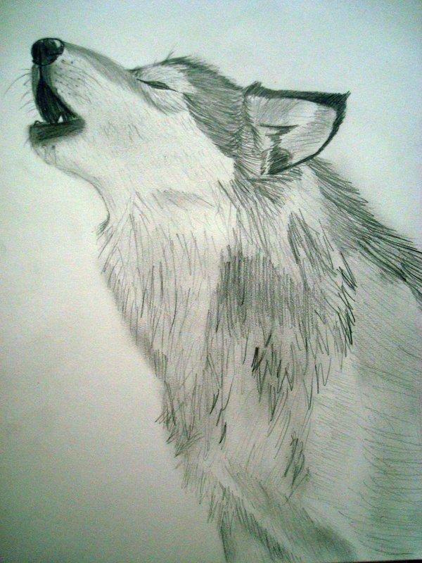 600x800 Howling Wolf By Artisticalassassin