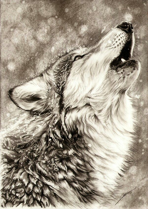 600x846 Pin By Zaden Fyre On Wolves Wolf, Drawings And Sketches
