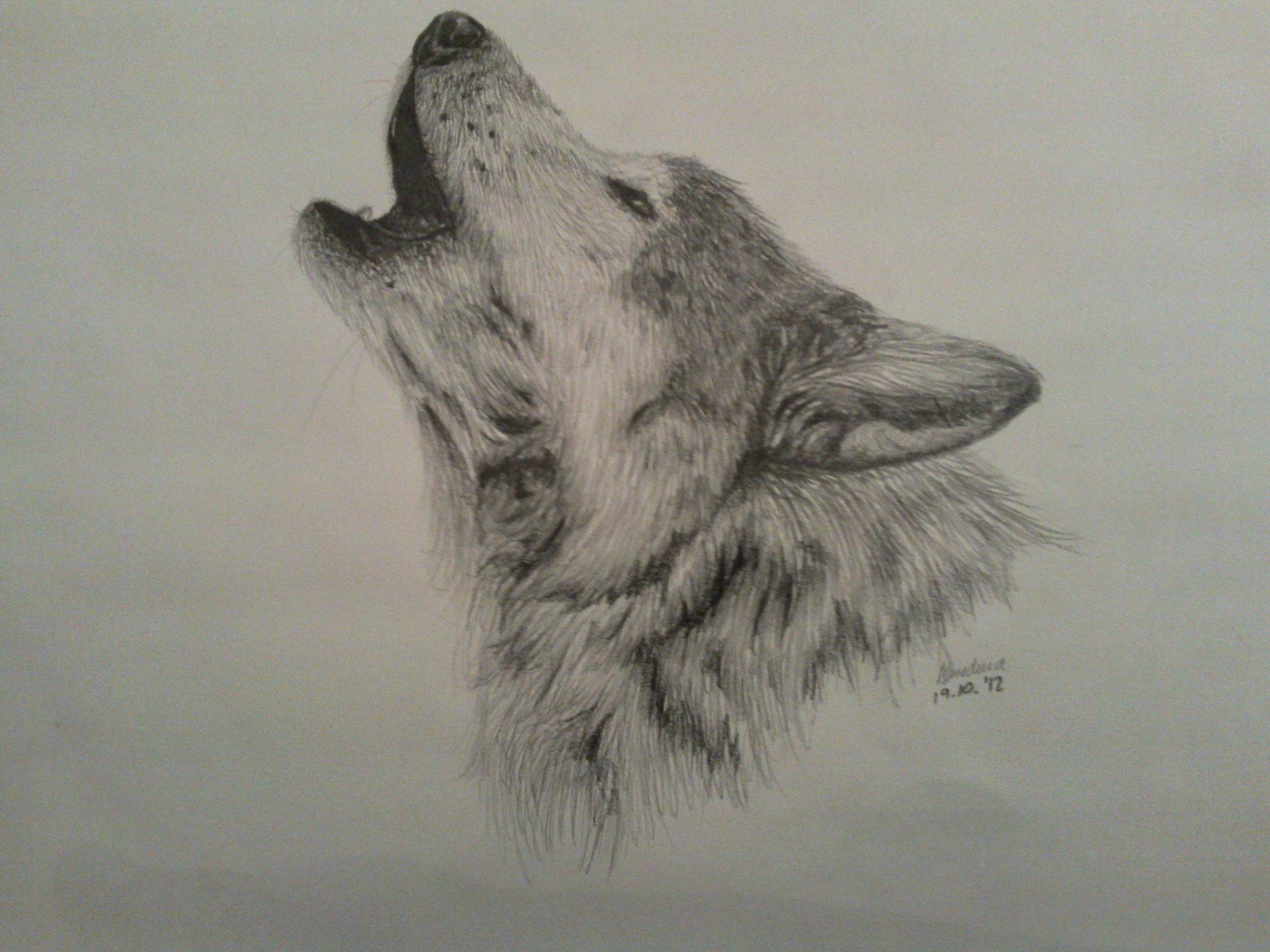 2560x1920 Wolf By Alme2208