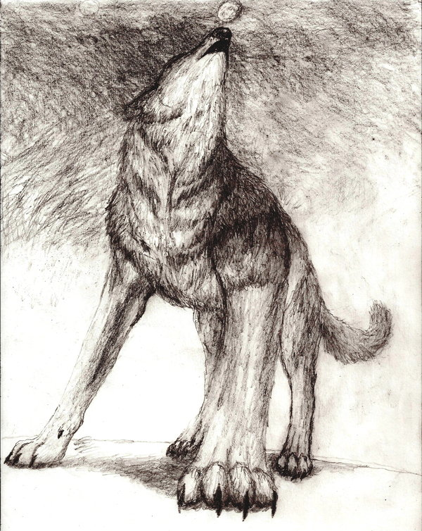 Howling Wolf Drawing at GetDrawings | Free download