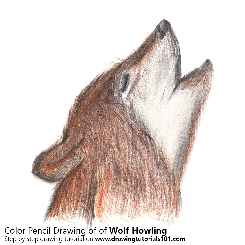 800x800 Wolf Howling Colored Pencils