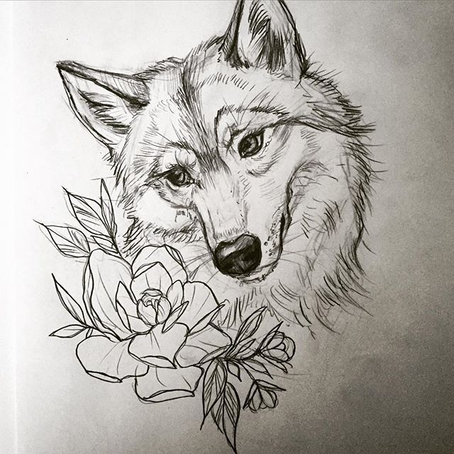 Howling Wolf Head Drawing At Getdrawings Com Free For Personal Use