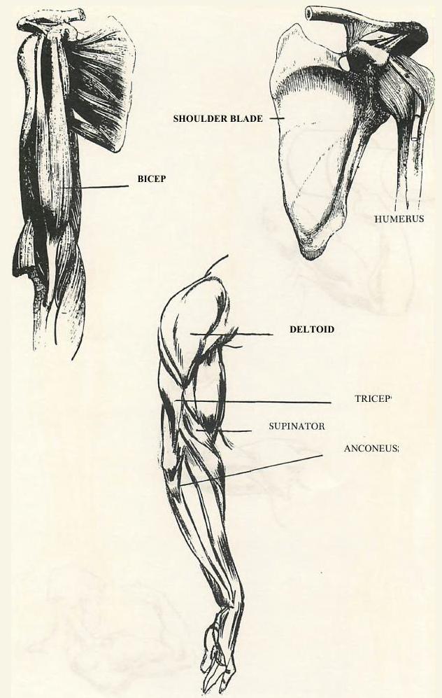 632x997 Drawing Human Arms And Hands How To Draw The Arms And Hands