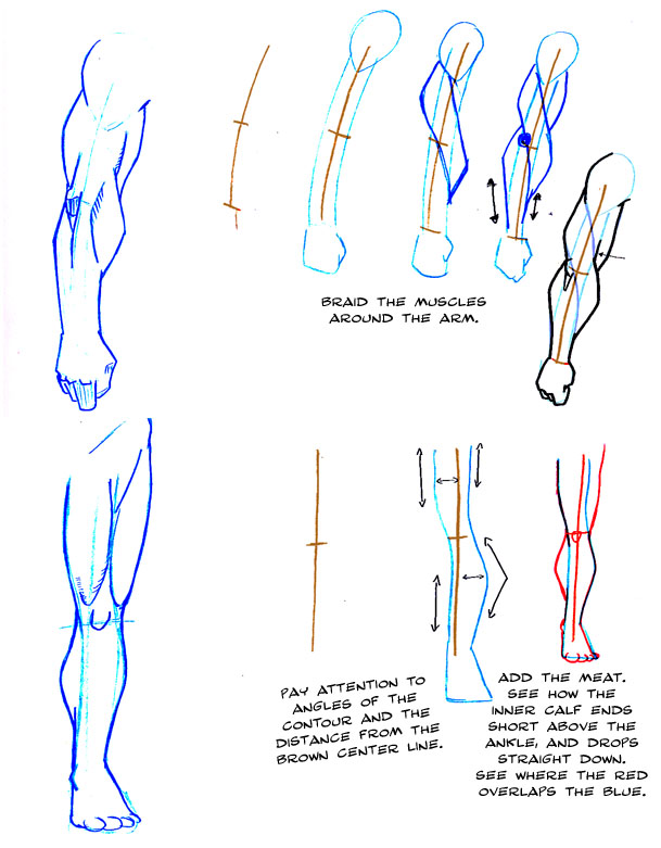 609x781 How To Draw Arms And Legs By Thirdpotato