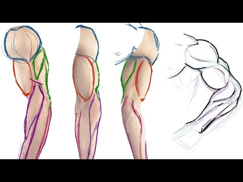 480x360 How To Draw The Muscles Of The Arm (Simple Anatomy Tutorial)