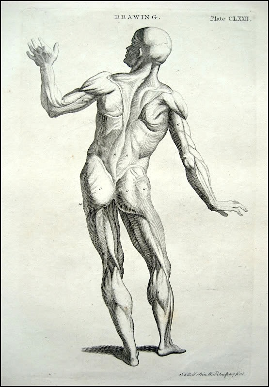 555x799 Figure Drawing How To Draw The Muscles Of The Human Body