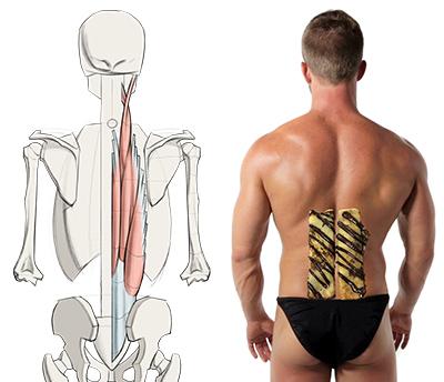 Human Back Drawing At Getdrawings Free For Personal Use Human