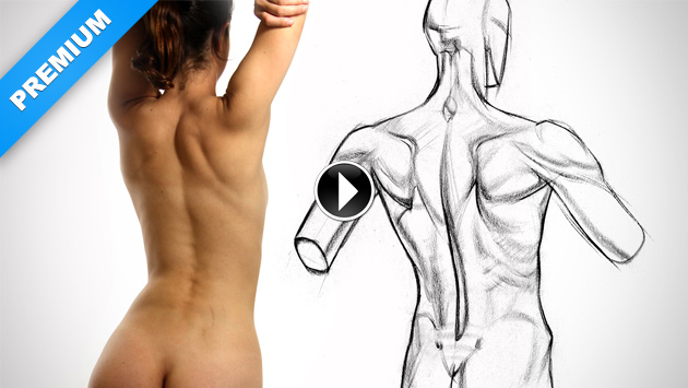 630x355 Physique Variations Of The Upper Back Muscles Proko