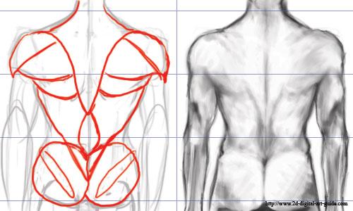 500x300 The Digital Art 101 Sitemap Male Torso, Anatomy Reference