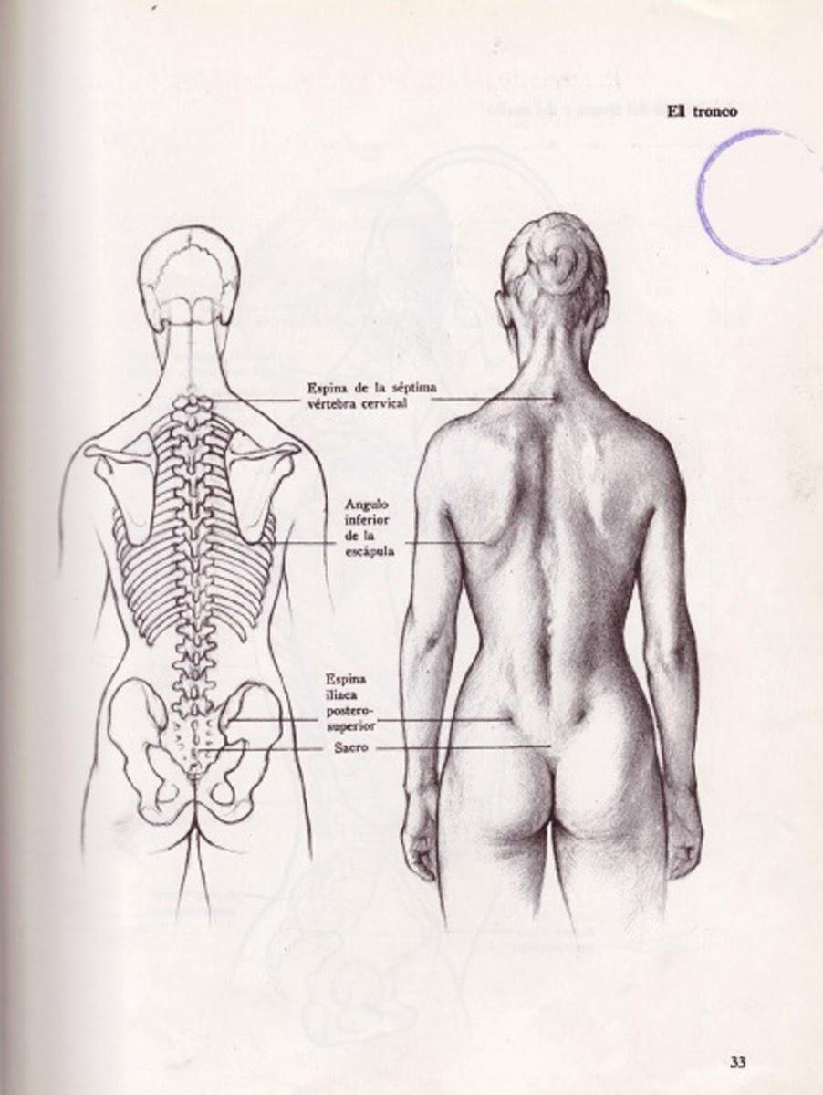 Human Back Drawing at GetDrawings.com | Free for personal use Human ...