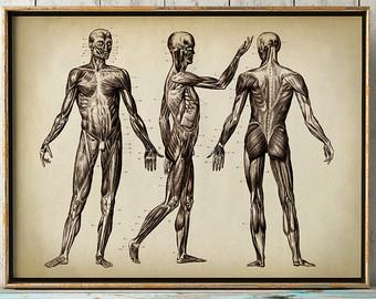 340x270 Anatomy Drawing Etsy
