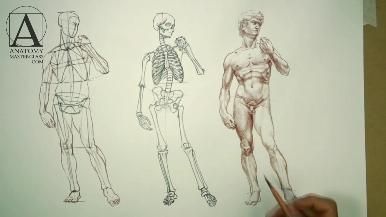 Contour Line Drawing People : Human body anatomy drawing at getdrawings free for personal