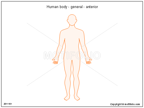 Human Body Drawing at GetDrawings.com | Free for personal use Human ...