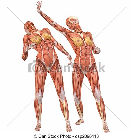 450x470 Female Human Body Anatomy Street Fight Project Awesome Anatomy