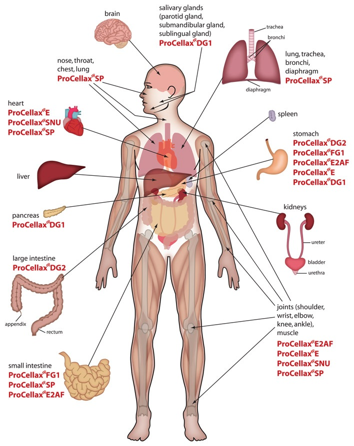 708x893 Human Stomach Anatomy And Physiology Places To Visit