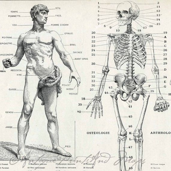570x570 Anatomy Organ Pictures Images Collection Human Anatomy Bones 206