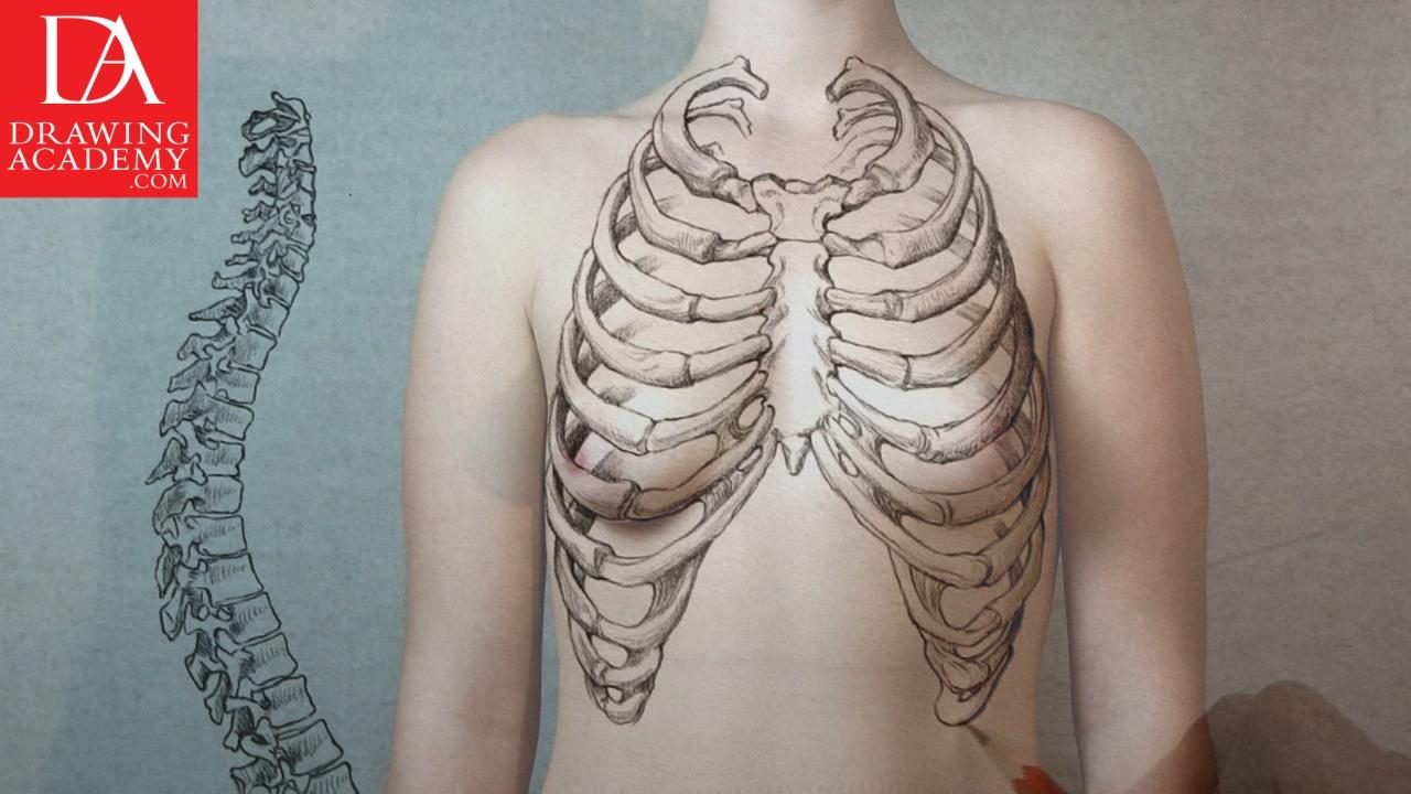 1280x720 Bones In The Human Body