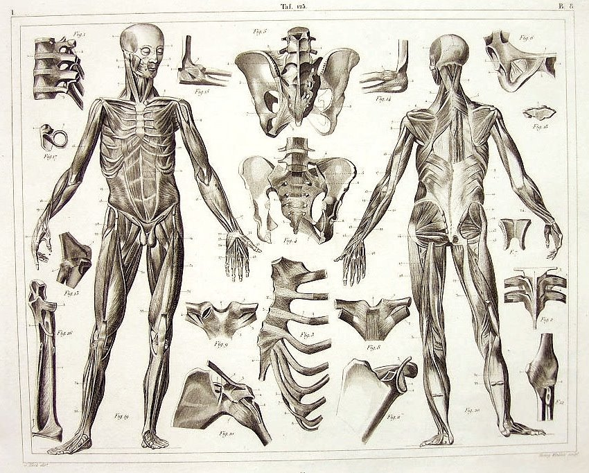 850x682 Figure Drawing The Human Skeleton And Muscles
