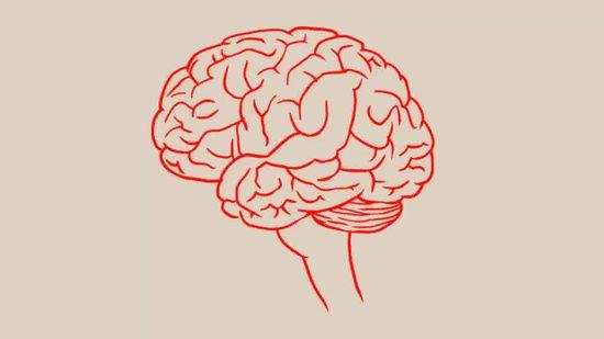 Human Brain Drawing at GetDrawings | Free download