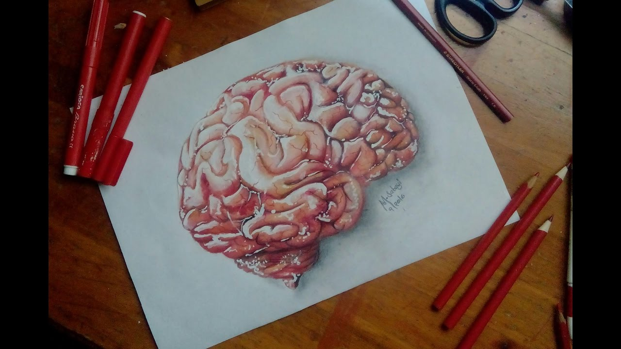1280x720 How To Draw A Human Brain