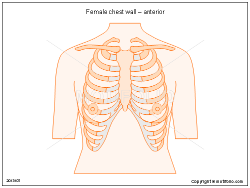 500x375 Female Chest Wall Anterior Illustrations