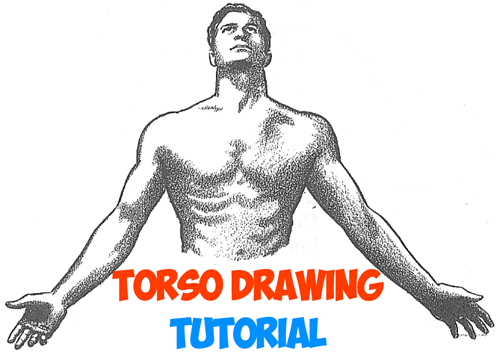 500x356 How To Draw The Human Torso And Chest
