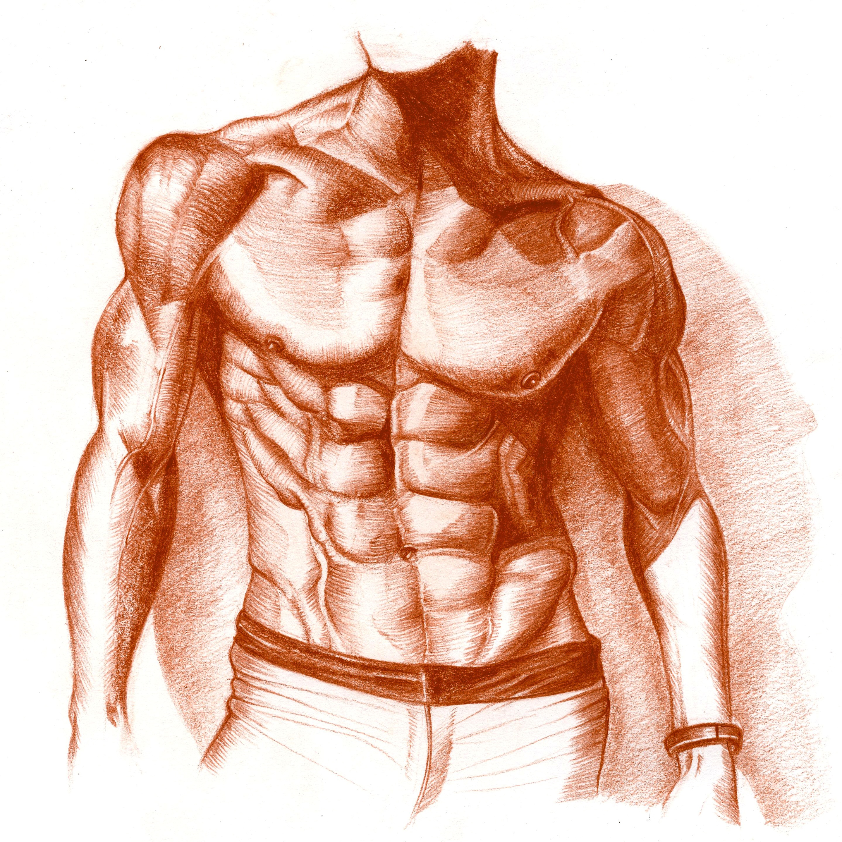Human Chest Drawing at GetDrawings.com | Free for personal use Human ...