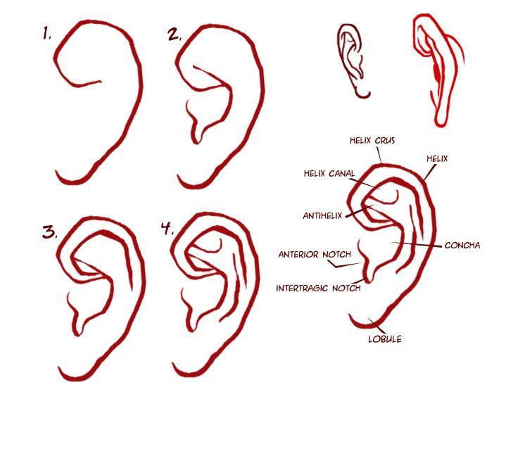 Human Ear Drawing at GetDrawings.com | Free for personal use Human ...
