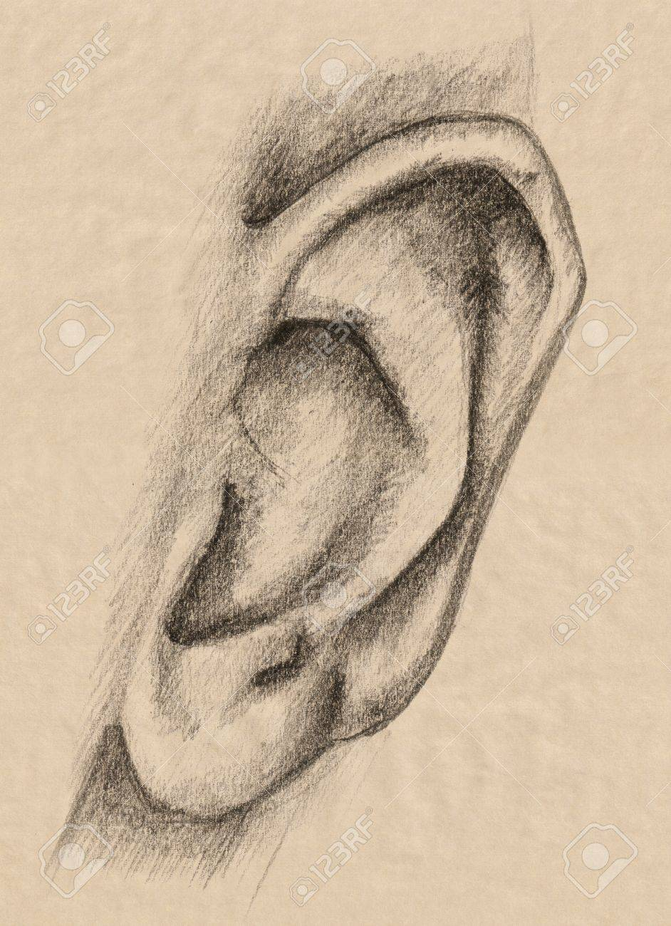 human ear drawing at getdrawings com free for personal use human rh getdrawings com