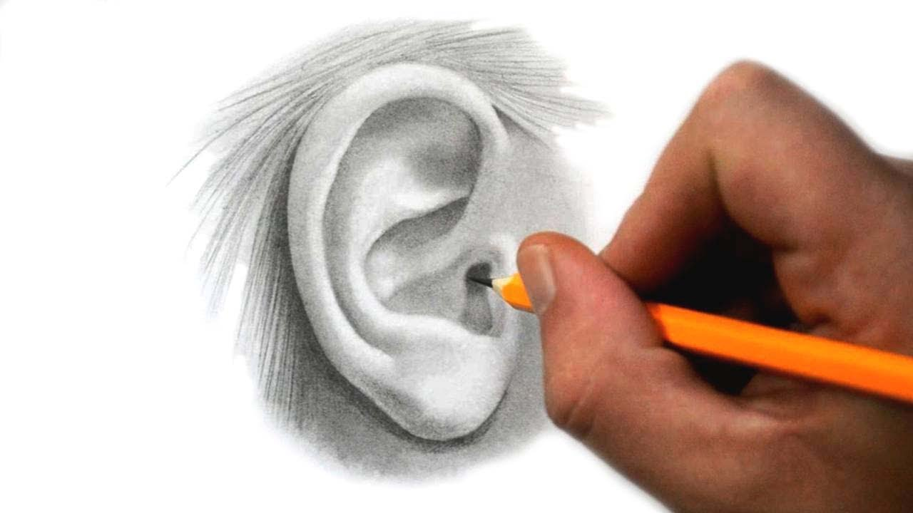 Human Ears Drawing at GetDrawings.com | Free for personal use Human ...