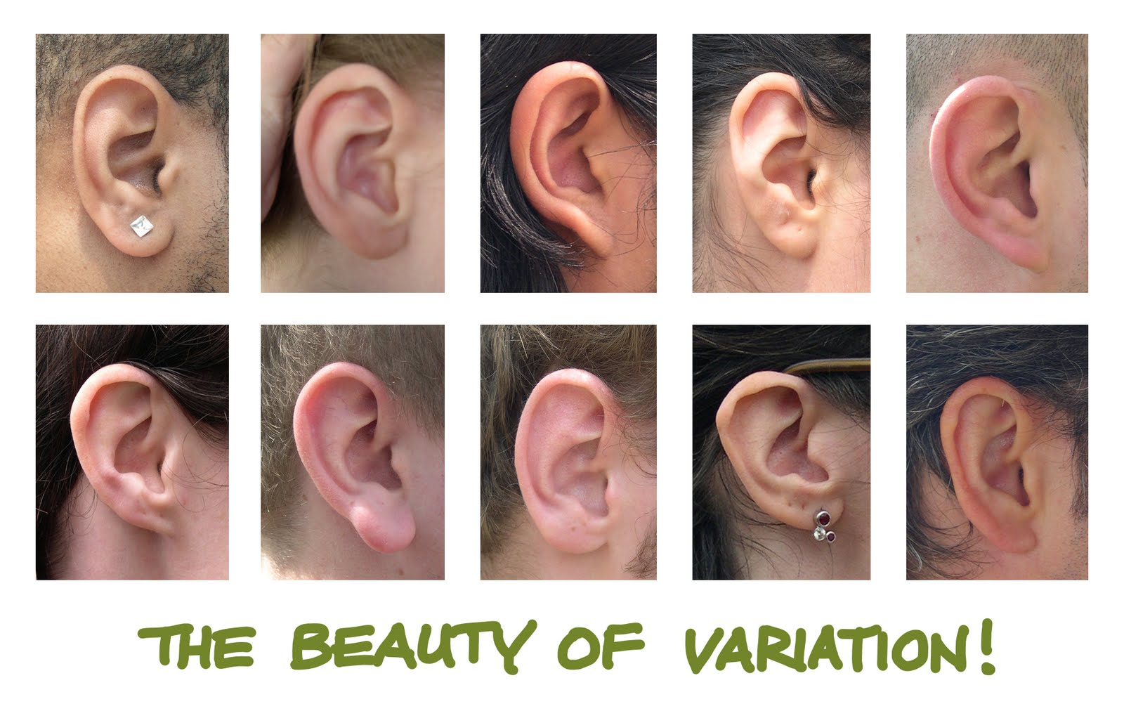 Human Ears Drawing At Getdrawings Com Free For Personal Use Human