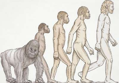 400x281 Challenging The Timeline Of Human Evolution Wisconsin Public Radio