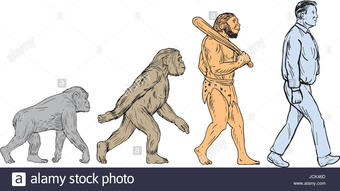 1300x732 Drawing Sketch Style Illustration Showing Human Evolution