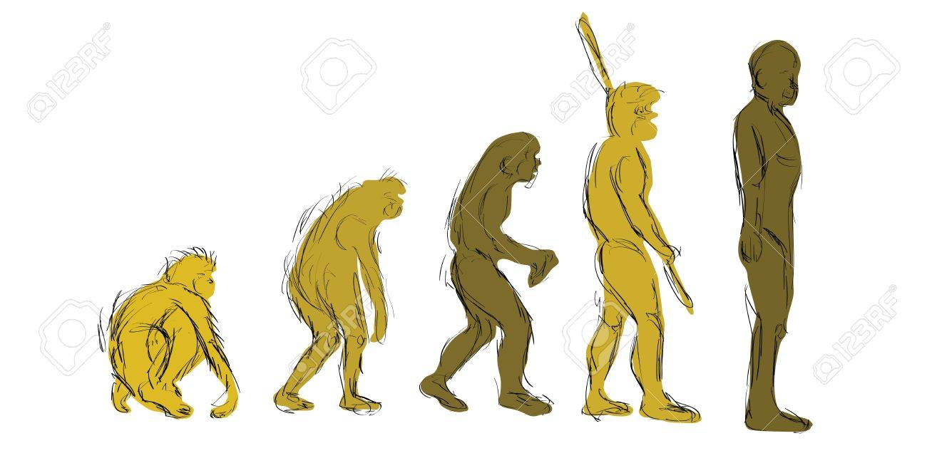 1300x650 Evolution Hand Draw Royalty Free Cliparts, Vectors, And Stock