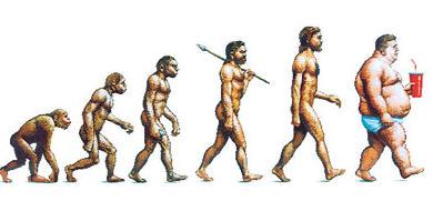 390x181 Human Evolution